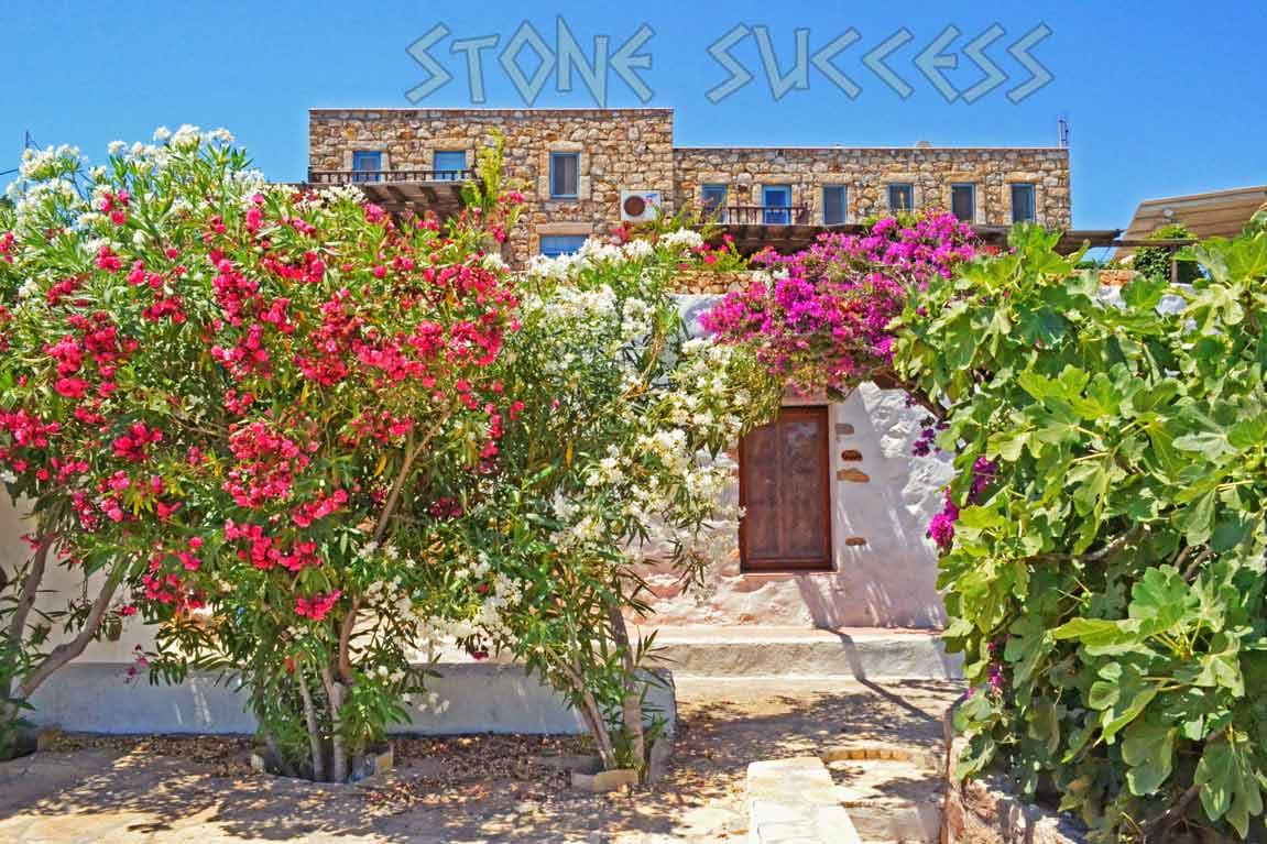 олеандры цветут в саду каменного дома