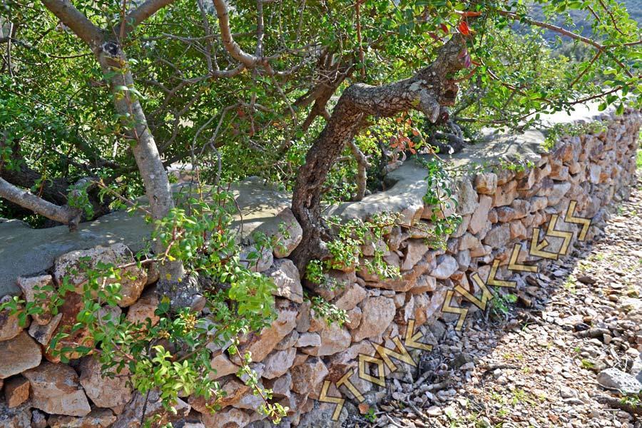 дерево, обложенное камнями