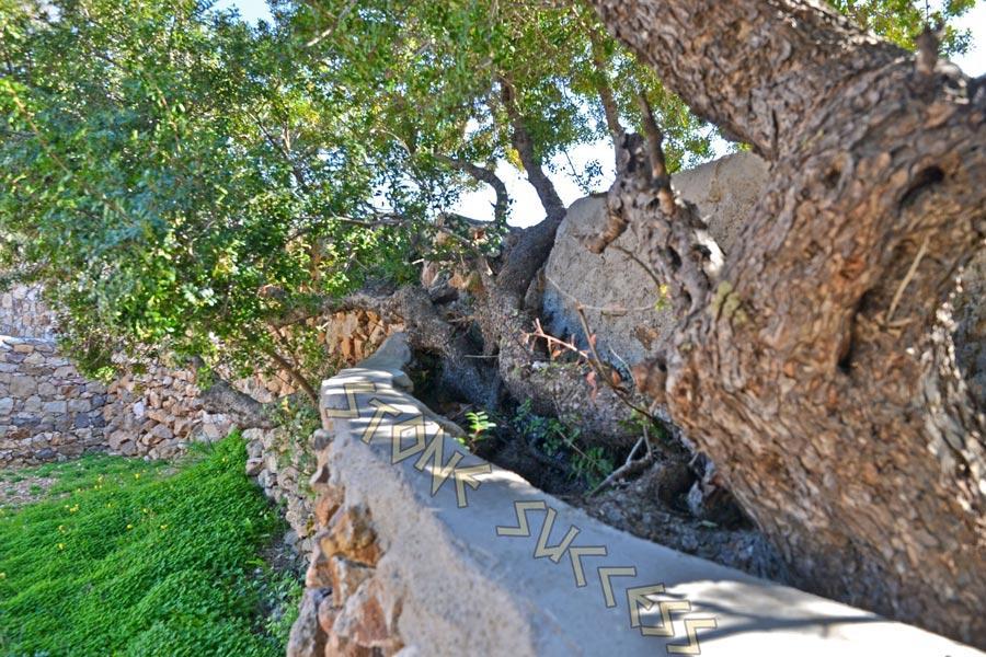 деревья, растущие вдоль забора