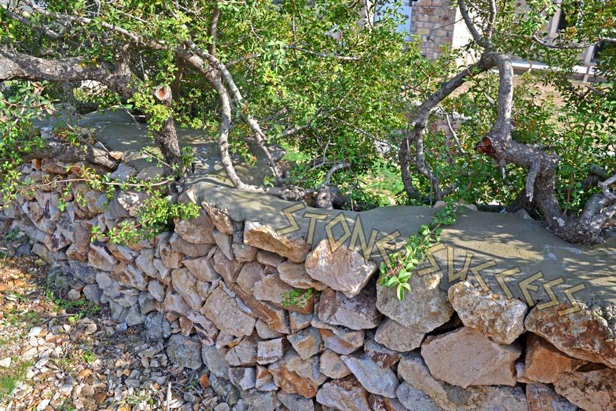 деревья в заборе