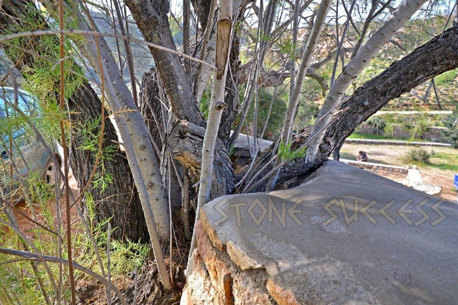 забор вокруг дерева