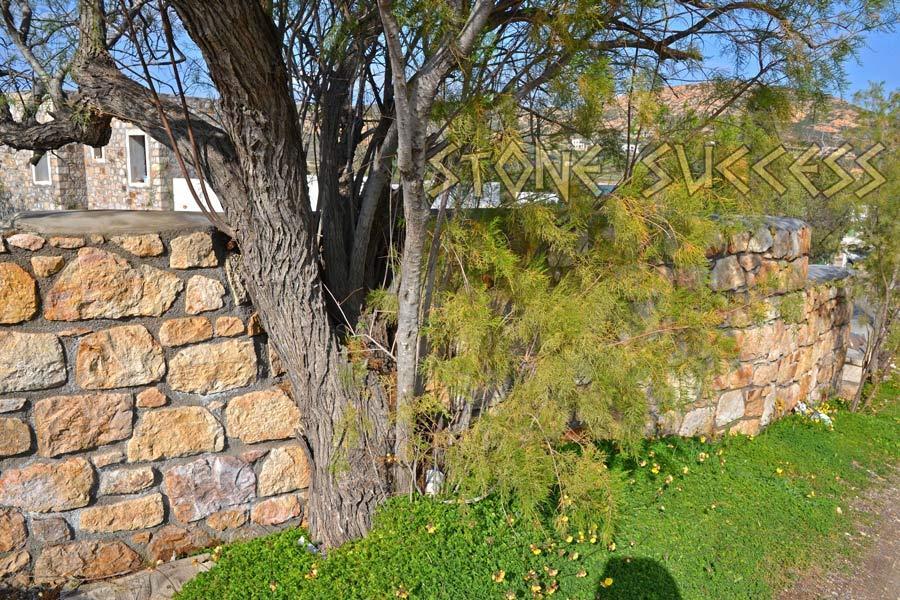 ландшафтный дизайн деревья и забор