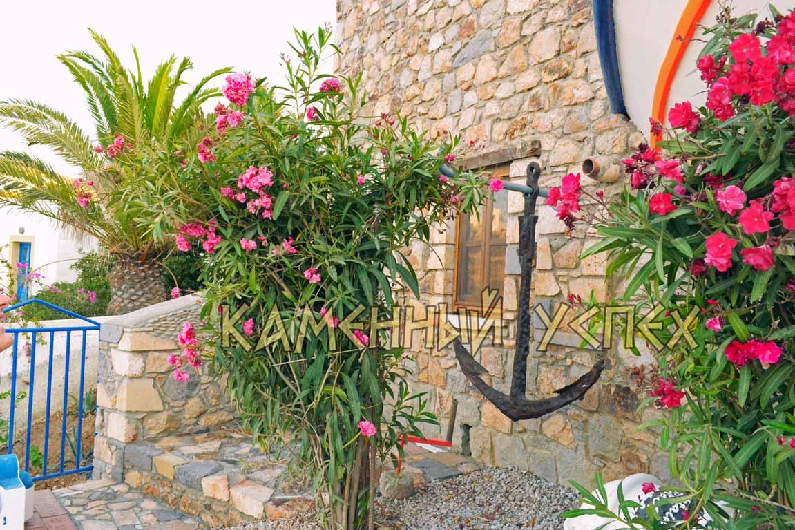олеандры сад